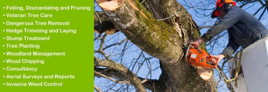 Derwen Tree Care West Wales